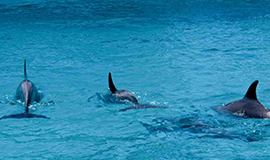 Dolphin Trip (Classic Cruise)